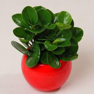 爱优尚 室内绿色植物