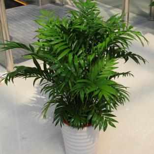 上海室内绿化花卉盆栽植物