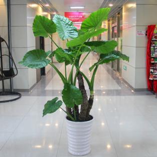 最好的室内空气净化绿色植物 上海
