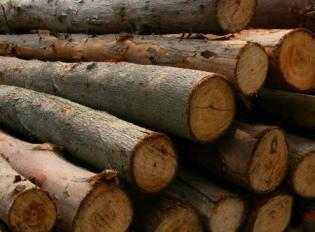 上海代理木材进口报关 木材报关全套代理