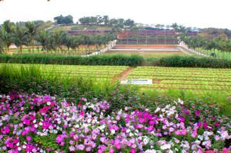 生态观光农业    新型生态旅游业    现代农业