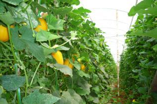 博远种植温室