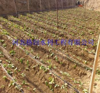 新宁滴水管|大棚滴灌--格润滴灌厂家