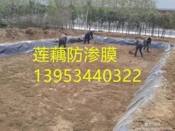 安徽藕池专用防渗膜价格 0.5mm防渗膜厂家