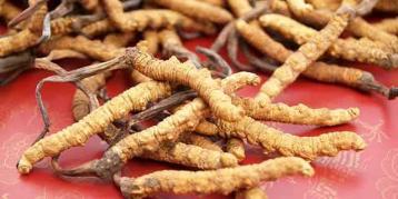 桂林冬虫夏草回收价格