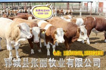正规养牛场电话15153003681