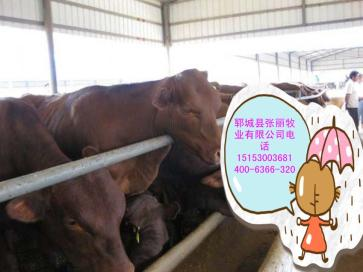 广东省惠州市什么地方肉牛长得快