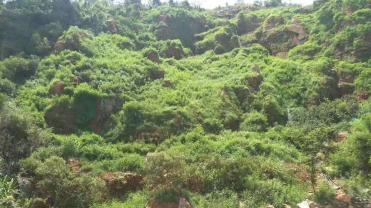 2018批发广西省高速公路边坡绿化草灌木种子