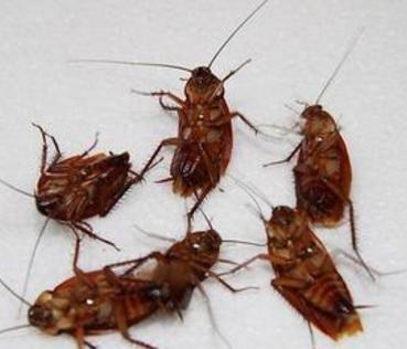 桂平杀虫灭蟑螂