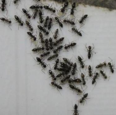 桂平灭蚂蚁老鼠公司