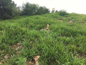 植被复绿草种重庆护坡植物种子