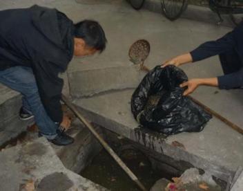 成都化粪池清理24小时服务