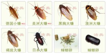 中山灭蟑螂采用适宜的药品
