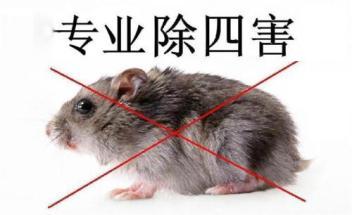 中山灭老鼠—鼠类的危害
