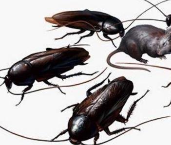 中山灭蟑螂的小技巧