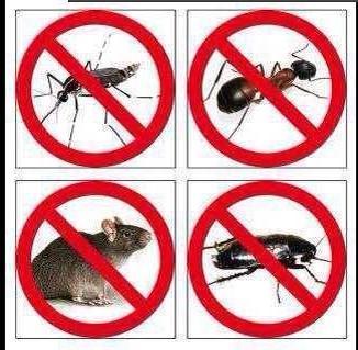 有效的中山灭老鼠措施