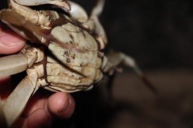 供应南京螃蟹 当天捕捉