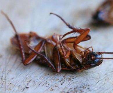 海南康立洁专业灭蟑螂老鼠