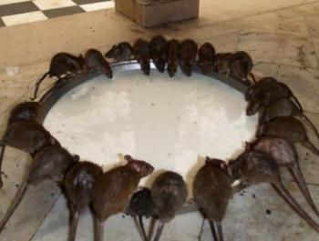 黄冈专业杀虫灭鼠值得信赖