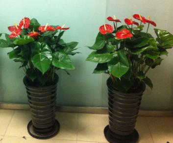 毕节花卉租摆等植物花卉的租赁