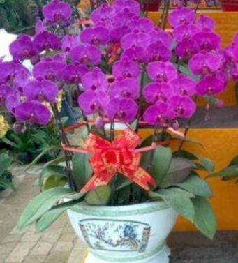毕节花卉出租绿化植物摆放