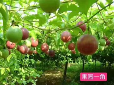 赣州农庄推荐-恩泉农庄休闲一日游