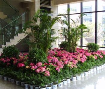 毕节鲜花租赁省去了客户花卉养护的烦恼