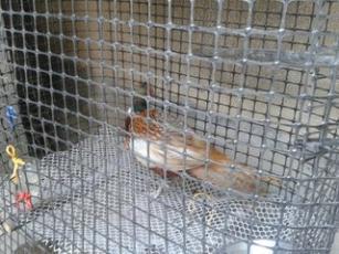 养殖各种家禽用塑料网,塑料土工格栅