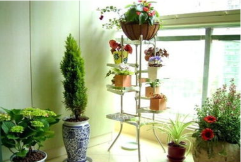 上海最新室内绿化植物装修效果图
