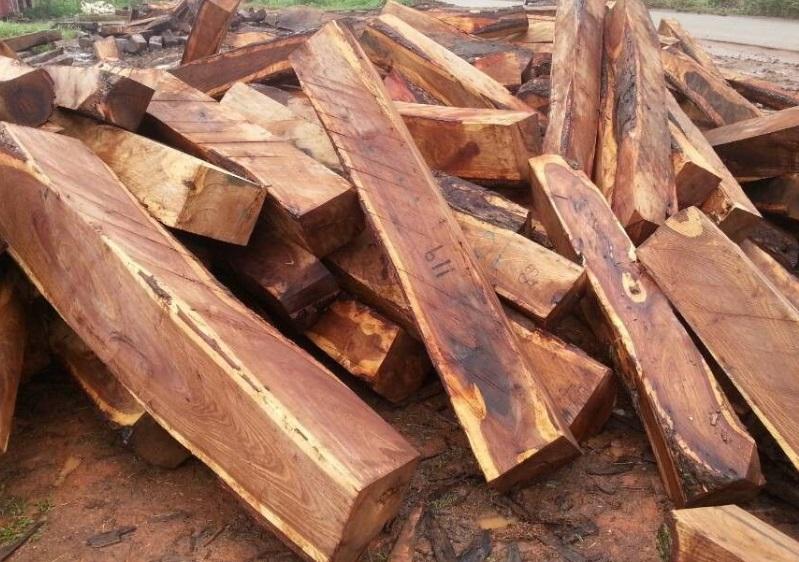 供应非洲紫檀木原木,供应非洲紫檀木原木价格
