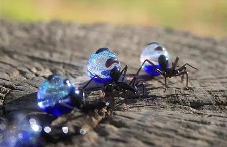 玻璃昆虫艺术作品:惟妙惟肖十分生动